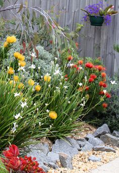 Pretty and interesting overall design Best Picture For Australian garden landscaping drought toleran Australian Garden Design, Australian Native Garden, Australian Native Flowers, Australian Plants, Backyard Garden Design, Garden Landscaping, Landscaping Design, Unique Gardens, Beautiful Gardens