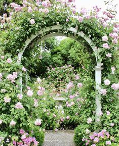 Victoria Magazine, Garden Arches, David Austin Roses, Container Flowers, English Roses, Hedges, Garden Beds, Outdoor Gardens, Landscape Design