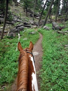 view from the back of a Paint horse, wooded trails so welcoming! Beautiful Horse Pictures, Beautiful Horses, Animals Beautiful, Pretty Horses, Horse Love, Cheval Pie, Paint Horse, Horse Ears, Horse Ranch