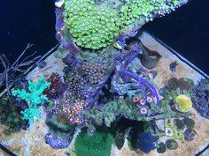Aquarium, Aquarius, Fish Tank