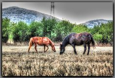 ~~ Horses, Colorful, World, Animals, Animales, Animaux, Animal, The World, Animais
