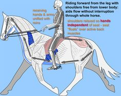 Amazing website on Biomechanical Riding.