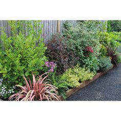 Find Evergreen Border Collection - x at Homebase. Visit your local store for the widest range of garden & outdoor products. Evergreen Bush, Evergreen Landscape, Evergreen Garden, Evergreen Shrubs, Garden Border Plants, Garden Shrubs, Garden Borders, Boarder Plants, Small Front Gardens