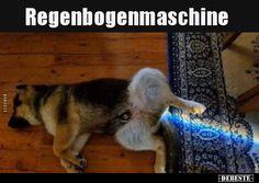 Dogs, Animals, Pet Dogs, Funny, Animales, Animaux, Doggies, Animal, Animais