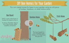 Creating a Bee-Friendly Garden A Few Simple Homemade Devices Can Go a Long Way