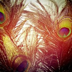 Peacock feathers! #obsessed #feathers
