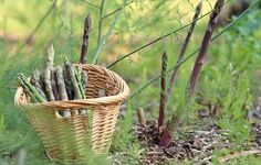 Not only does fresh-picked asparagus taste superior to store-bought, it's also a perennial, so it comes back year after year!