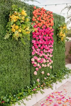 Ombre rose wall with greenery background