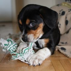Why do dogs get bored so quickly with most of their toys?