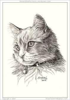 Portrait of a Adolescent Short-haired Tabby Cat done in pen and ink - Custom Portrait Commissions of Pets by Shafali - Animal drawings, Sketches, Wildlife art etc in back and white.