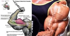You Are Wasting Your Time Working Out Your Biceps!