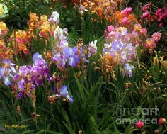 """""""American Giverny"""" ~ Copyright 2010 RC deWinter ~ All Rights Reserved"""