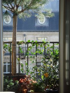 #Balcon #paris @Lisa Phillips-Barton Phillips-Barton'aurey des jardins