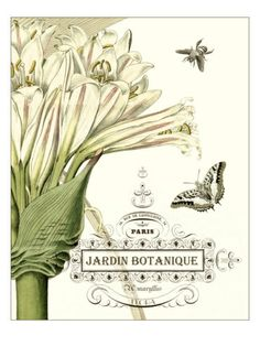 $49.99 Jardin Botanique II Giclee Print by Vision Studio at Art.com 18x24