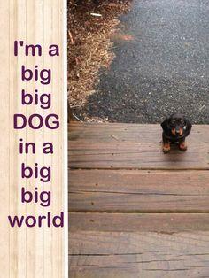 Big big dog  Big Dogs = Man's Best Friend / www.PetWellbeing.org