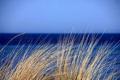 Kostenloses Bild auf Pixabay - Meer, Wasser, Blau, Gras, Dünen