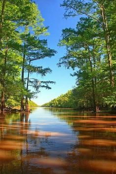 """""""I'm goin' back some day, come what may, to Blue Bayou. Where you sleep all day and the catfish play on Blue Bayou. Nature Pictures, Cool Pictures, Beautiful Pictures, Wonderful Places, Beautiful Places, Landscape Photography, Nature Photography, Autumn Scenery, Amazing Nature"""
