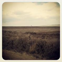 Lonely Tree, North Yorkshire