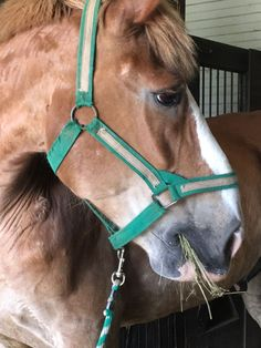 380 Best Real Life Horse Stories images in 2019   Horse story