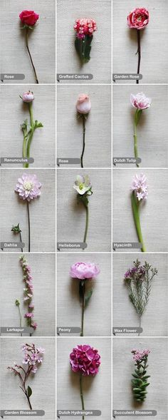 Types Of Pink Wedding Flowers Wedding Flower Types On Pinterest