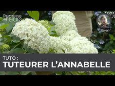 (381) Tuto : tuteurer l'hortensia Annabelle - YouTube Hortensia Annabelle, Hydrangea, Gardens, Hydrangeas, Garden Deco, Garden Landscaping, Patio, Home, Hydrangea Macrophylla