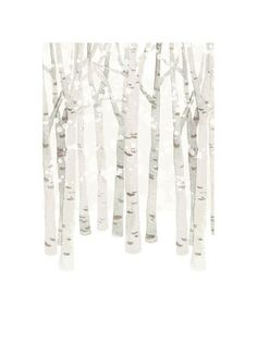 Birch Woods in Winter by Four Wet Feet Design for Minted