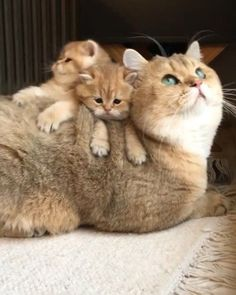 These cute kittens will bring you joy. Cats are incredible creatures. Cute Cats And Kittens, I Love Cats, Crazy Cats, Kittens Cutest, Cute Funny Animals, Cute Baby Animals, Animals And Pets, Funny Pets, Beautiful Cats