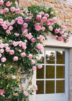 Prieure Notre-Dame D'Orsan, France. Rose Pierre de Ronsard beside a blue door