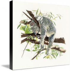 koala  by Patrizia Donaera ,from $102.70