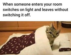 "Caturday Memes For The Feline Lovers - Funny memes that ""GET IT"" and want you to too. Get the latest funniest memes and keep up what is going on in the meme-o-sphere. Funny Shit, Crazy Funny Memes, Funny Animal Memes, Stupid Memes, Funny Relatable Memes, Wtf Funny, Funny Animal Pictures, Funny Facts, Cute Funny Animals"