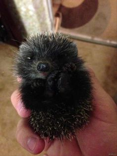 Dump A Day Furry Cutie-Patooties! - 27 Pics  Is this a hedgehog?