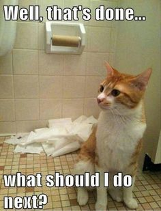 My cat does this, she even gets into the cabinet and shreds the TP. I found two rolls on my bathroom floor yesterday.