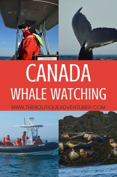 Watching whales in Canada is a unique experience that you don't what to miss during your trip to Canada. Where to go? What to expect? I put on this guide to whale watching in St Andrews in the Bay of Fundy. Cool Places To Visit, Places To Travel, Travel Destinations, Quebec, Canadian Travel, Canadian Rockies, Columbia, Montreal, Animal Experiences