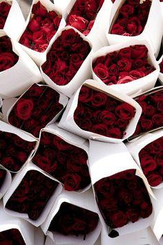 Red Rose♥