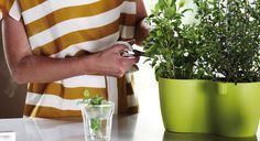 Elho Brussel Herbs Duo http://makeithome.pl/