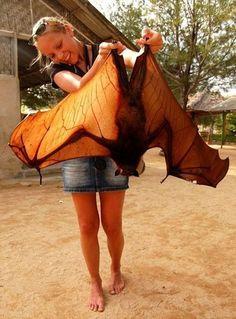 Lady lovingly carries a GIANT BAT OMG WOOOOAH now!