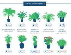 houseplants, NASA, Clean Air Study, air filtering houseplants, infographic, reader submitted content, houseplants improve air quality,