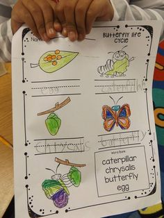 Butterfly craft, butterfly close read in Kindergarten.  Butterfly freebies too!