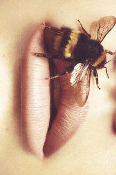 Bee stung
