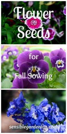 Flower Seeds for Fall Planting with Sensible Gardening. Why some seeds need the cold treatment and which plants to sow in the fall for next years blooms.