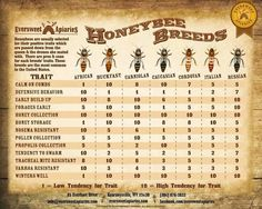 Honeybee traits by breed More