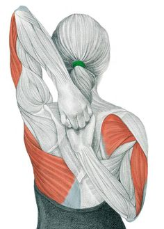 After doing leg and arm stretches, today we'll present 11 illustrations of neck and back stretching exercises, showing you exactly which muscle you are exercising. By demonstrating where on your body you should feel the highest tension, we hope to help you do the exercises properly. Most of us spend the majority of the day …