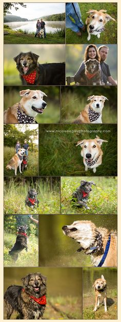 Dog Photos Pittsburgh - Brindi and Schultz - Pet Photographer Pittsburgh - Equine Portraits - Commercial Dog Photography