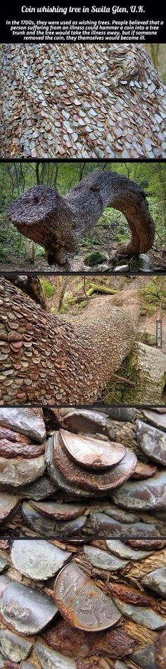 Coin wishing tree in the U.K. Supposed to cure illness.  Sad how many coins are in there