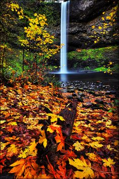 Autumn in Silver Falls State Park,South Falls, Oregon
