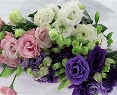 Mariachi Assorted - Lisianthus - Flowers and Fillers - Flowers by category | Sierra Flower Finder