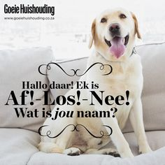 Wat is jou naam? What Is Your Name, Word Of Advice, Words Quotes, Qoutes, Twisted Humor, Afrikaans, Friends Forever, Funny Cute, Snuggles