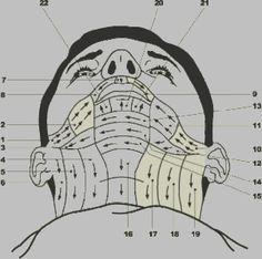 Un guide sur les diff rentes sortes de barbes un gars avec une grosse barbe c est oui ou non - Se raser avec un coupe chou ...