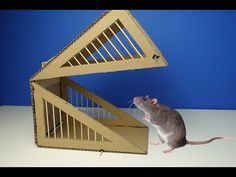 DIY Simple Rat Trap from Cardboard - YouTube