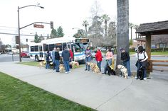 Guide Dogs of America Puppy Training on Foothill Transit by Foothill Transit Photos, via Flickr